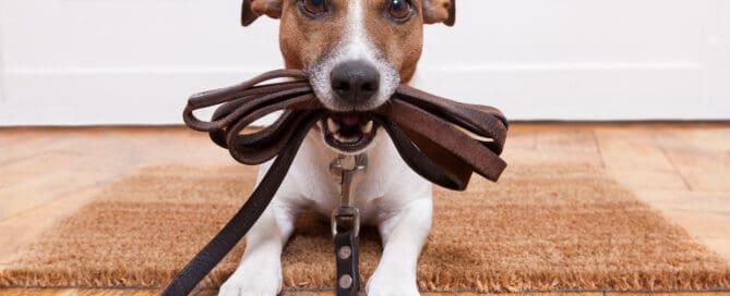 allowing dog at vacation rental