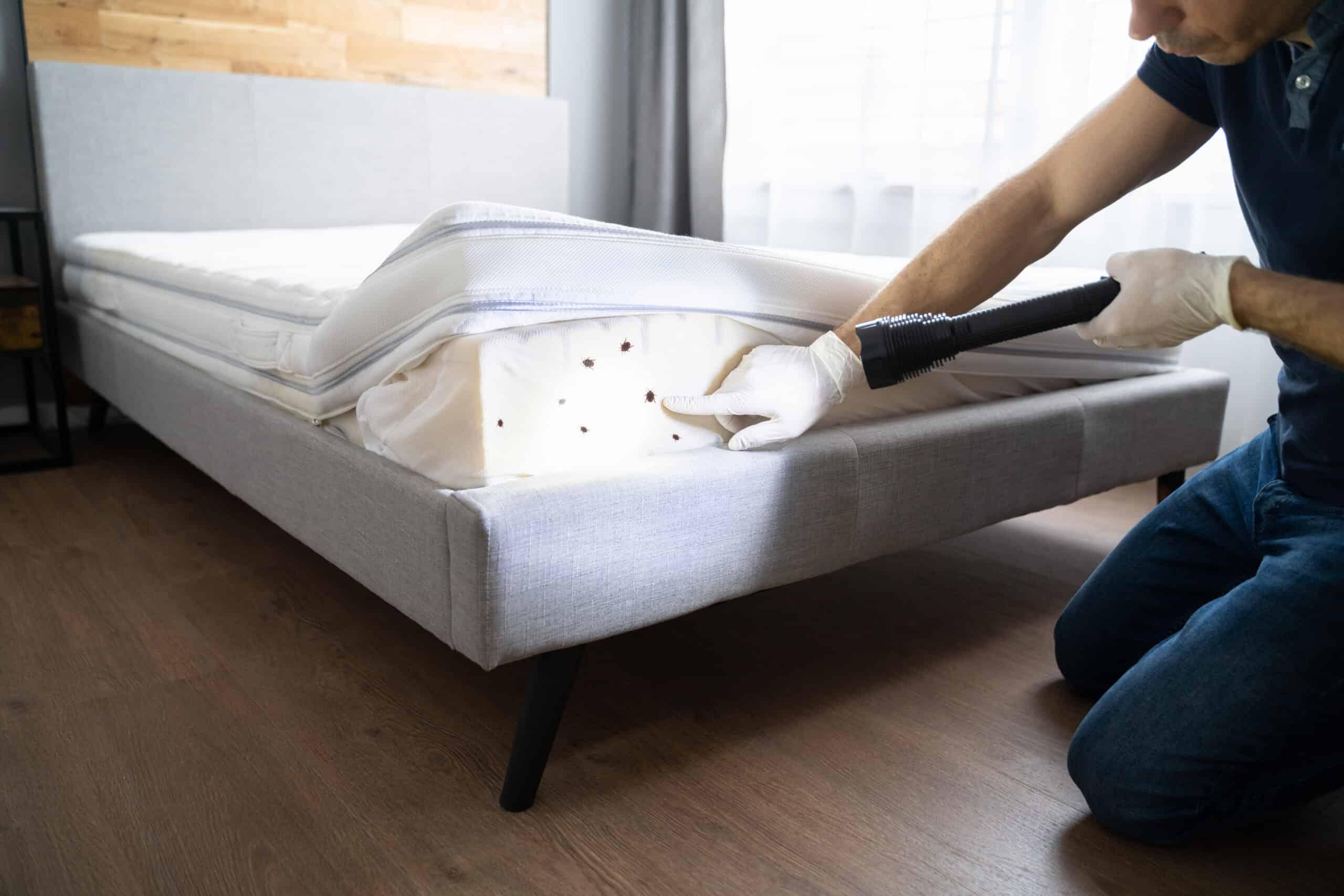 bed bugs at short-term vacation rental